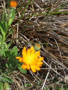 Happy Yellow Flower