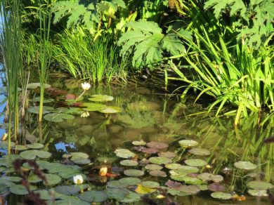 Mixed Lillies on water1