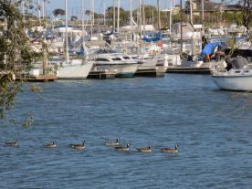 Boats&Geese