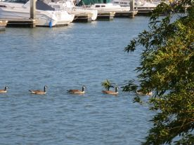 Boats&Geese2