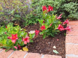 red flowers in planter