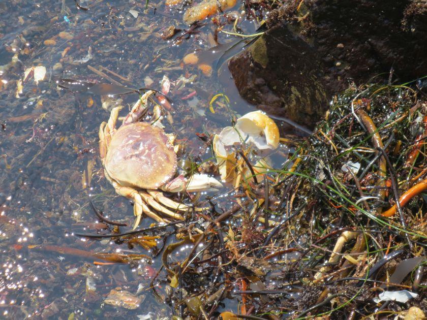 Dead Crab 1