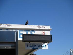 Terminal Bldg & pigeon