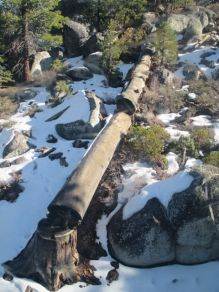 Fallen tree from Gondola