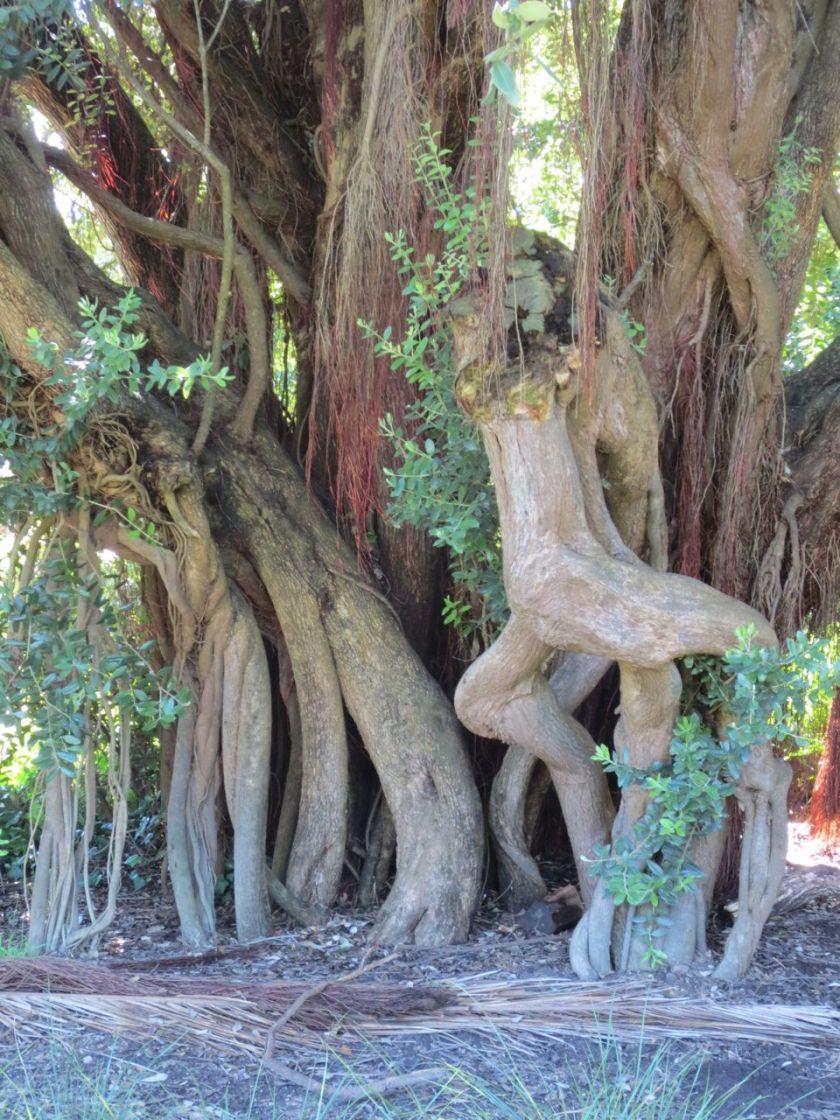 Hairy Tree 2