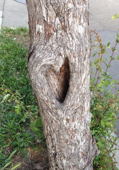 Heart hole in tree