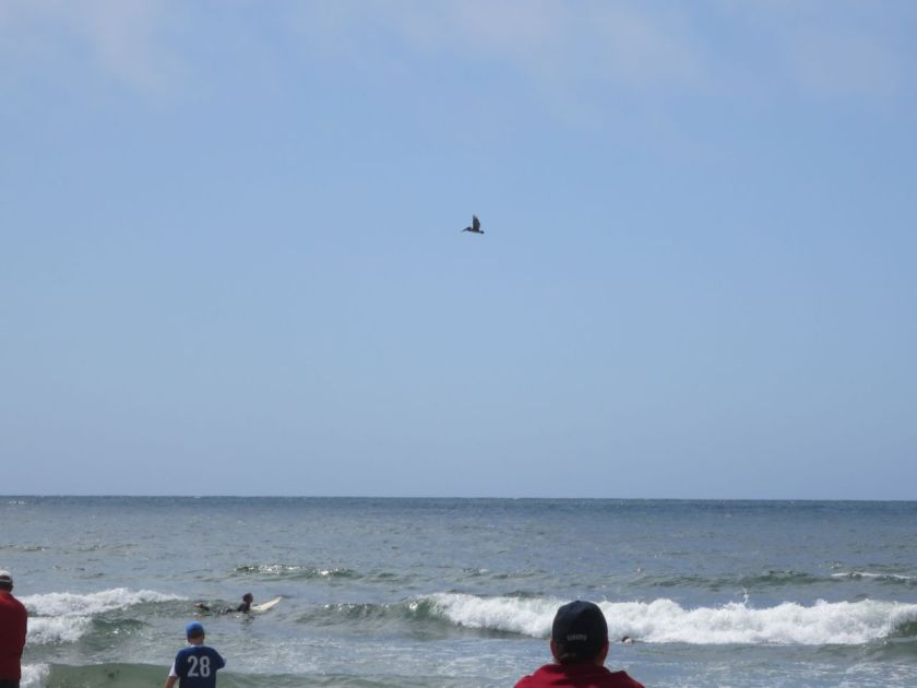Pelican Over Beach