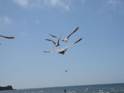 Seagulls from Behind
