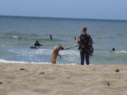 Standing Dog on Leash at Beach