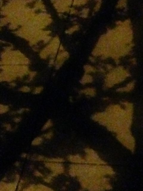 Tree Shadow 2