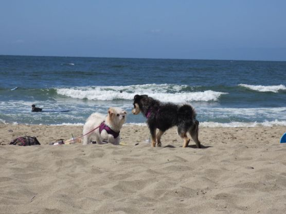 White & Black Dogs