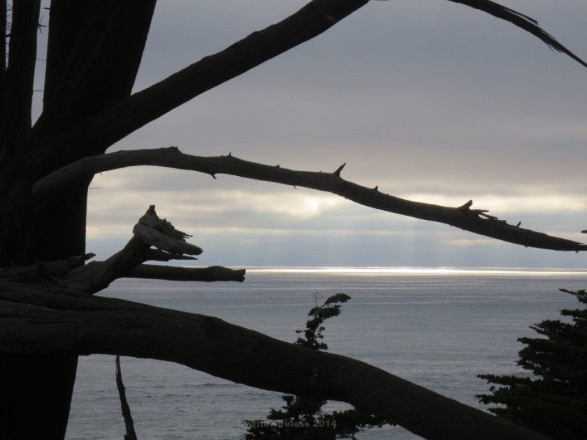 FMR FMR Seascape with Silhouette Branches