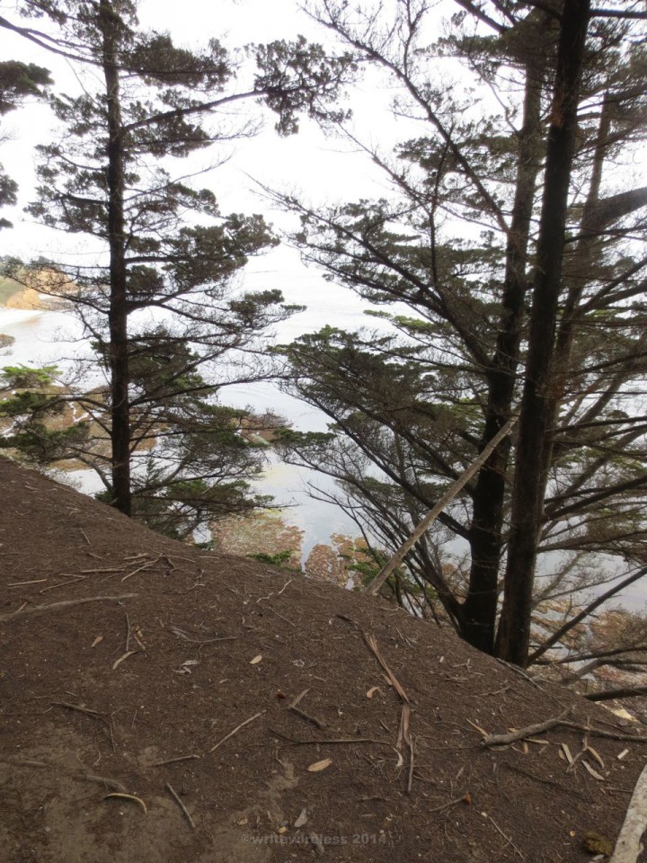 FMR Plunging View with Pines