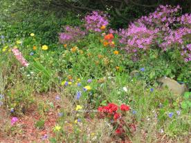 Multicolored Flower Garden, Moss Beach