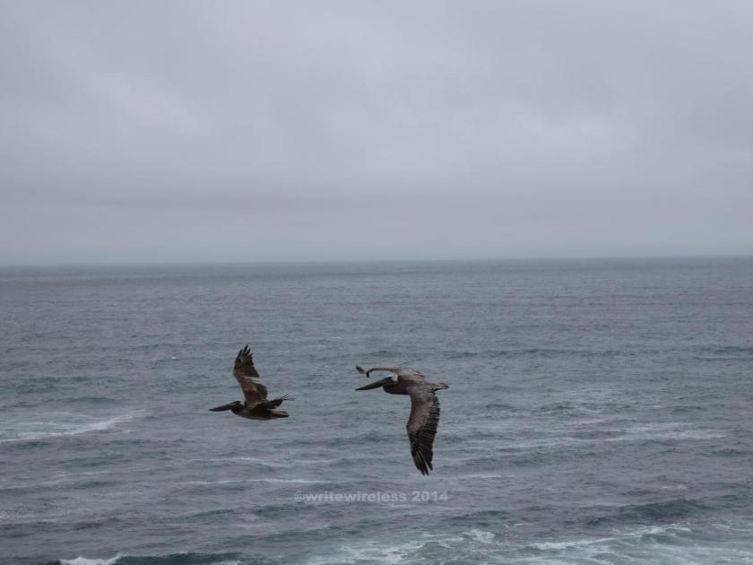 Two Flying Pelicans