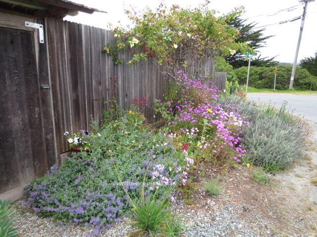 Moss Beach Fence Garden