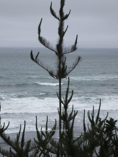 Fitzgerald Pine on Shore