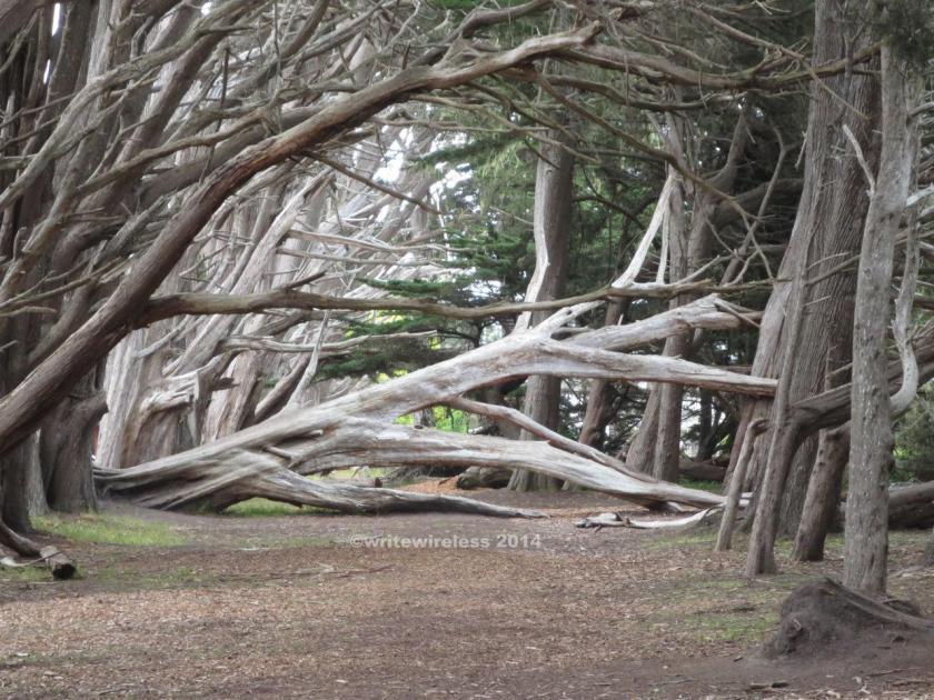 Fitzgerald Fallen Tree