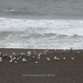 Huddled Beach Birds