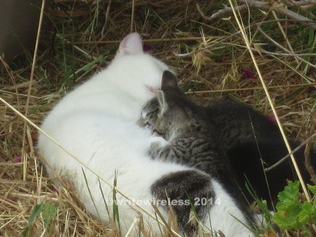 Mama Kitty & Kittens 3