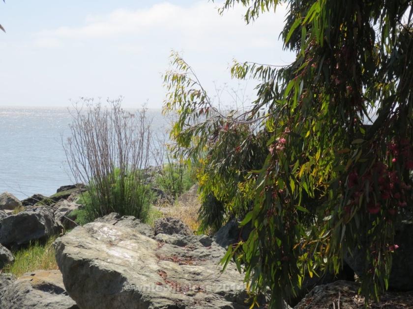 Plants & Rocks at OP
