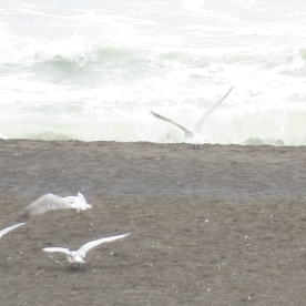 Seagulls and waves