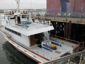 Marine Discovery Tours boat