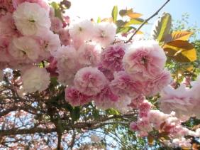 Blossoms Close-Up
