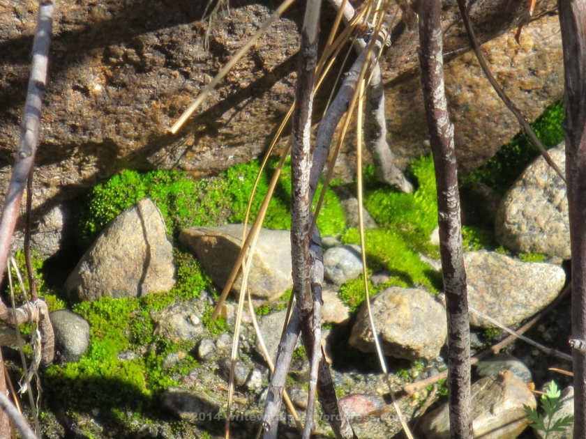 Stones, moss, and twigs