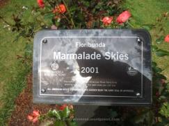 Marmalade Skies 3
