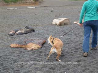 Dog & Whale blubber