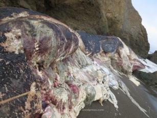 Whale innards