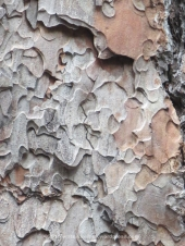 close-up-of-bark