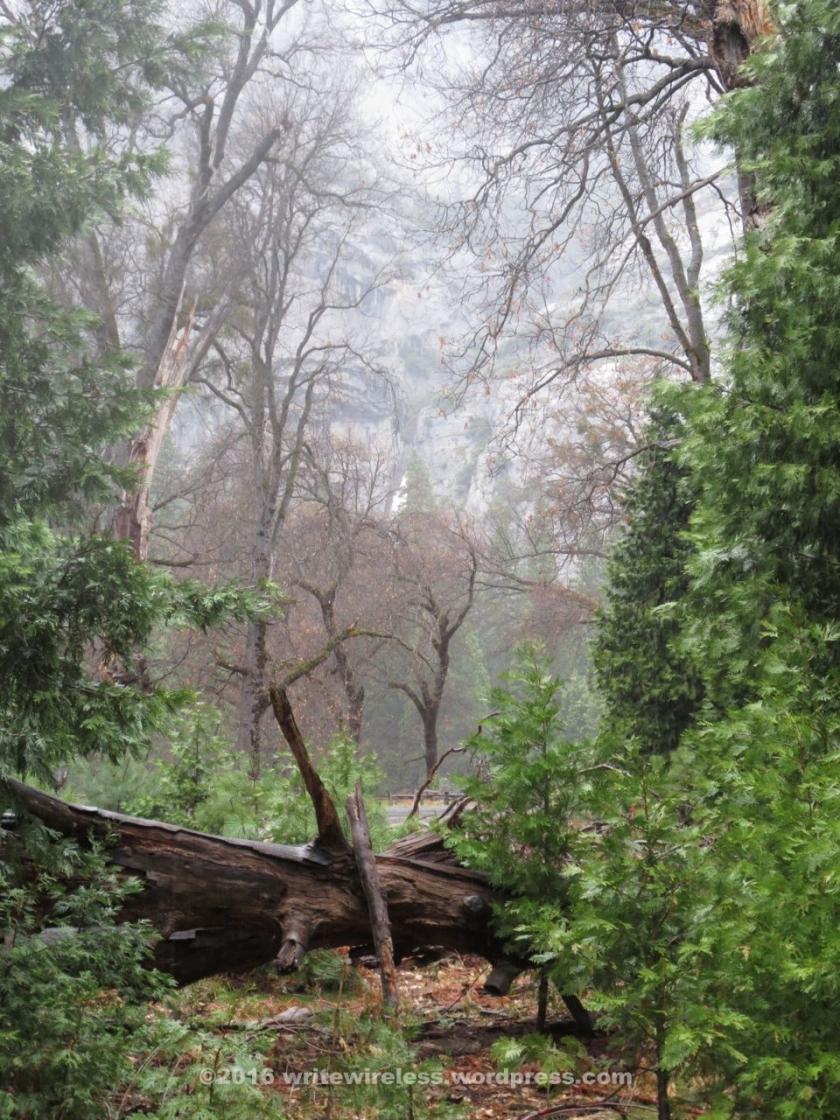 fallen-log-w-forest-backgrd