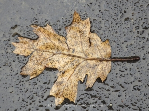 leaf-on-ground